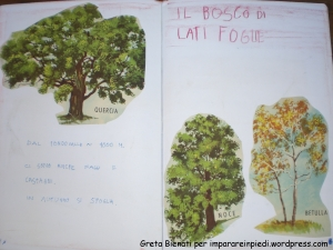 bosco latifoglie