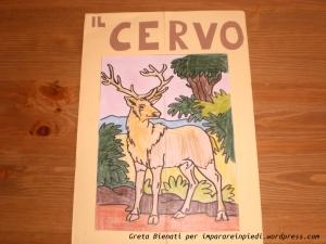 lapbook cervo 1