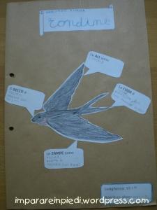 bird nature journal 4