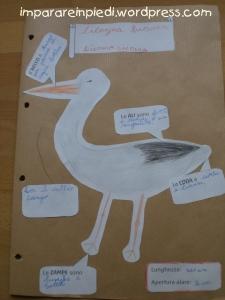 bird nature journal