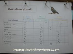 classificazione uccelli